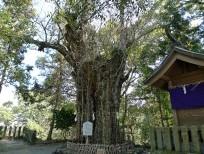清正公お手植えの樹