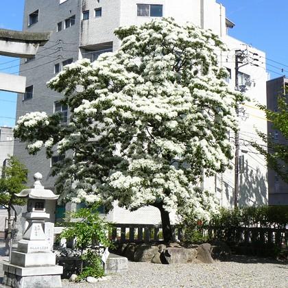金神社の店舗画像3
