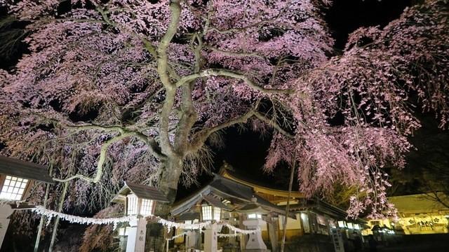 南湖神社の店舗画像3
