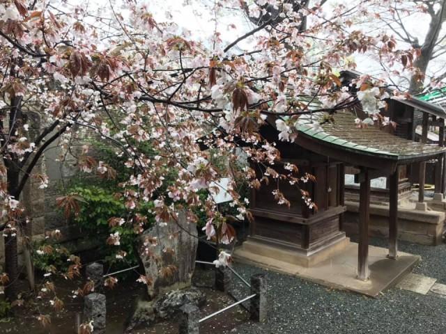 川越 熊野神社の店舗画像1