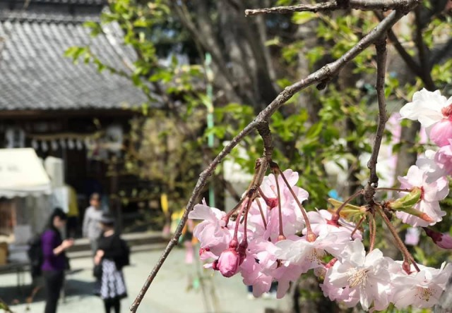 川越 熊野神社の店舗画像2
