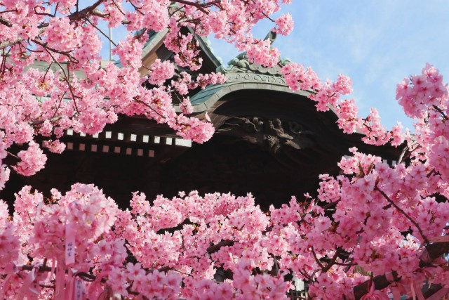 桜神宮の店舗画像3