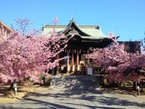 桜神宮のサムネイル