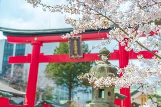 善知鳥神社第二鳥居と桜