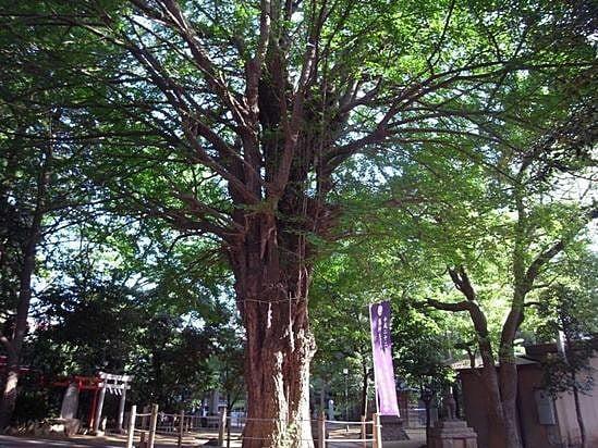 鳩森八幡神社の店舗画像2