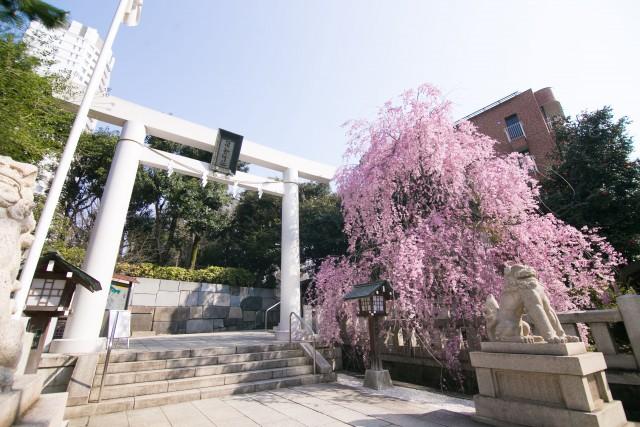 乃木神社の店舗画像2