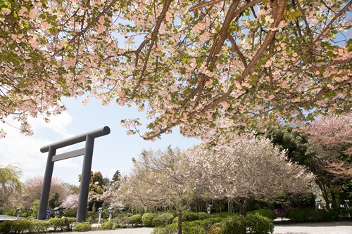 櫻木神社の店舗画像1