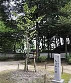 しおがま桜(天然記念物)